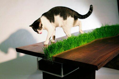绿色办公桌(三)