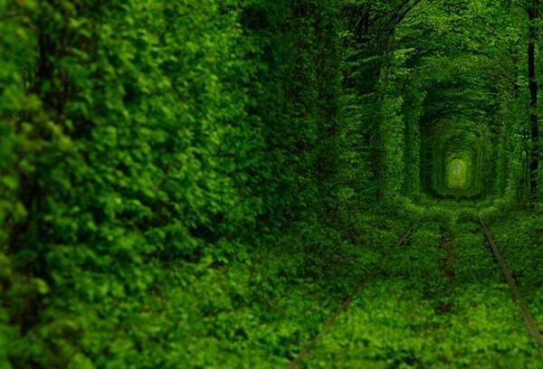 用树木搭建爱的隧道 来自乌克兰
