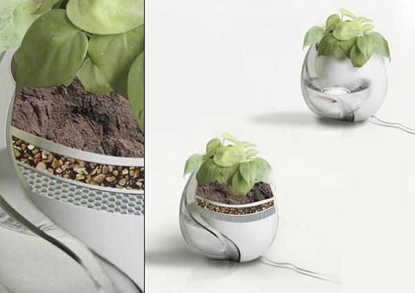 生长在花盆里的鱼缸细节