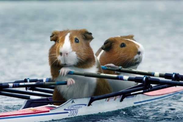 荷兰猪运动会划船