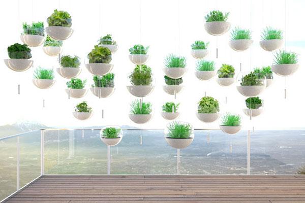 阳台上悬浮的绿色植物(二)