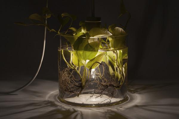 环保给力的花瓶植物灯