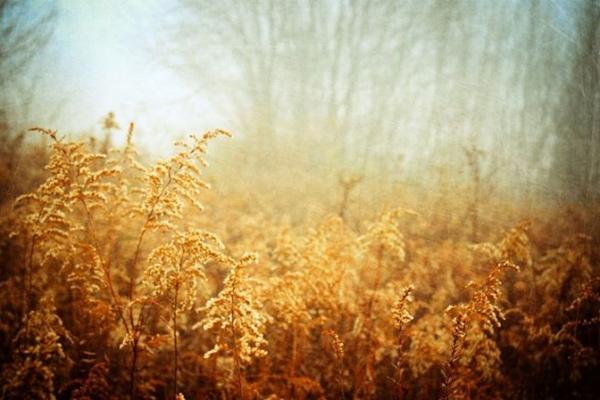 迷雾美景如诗如画