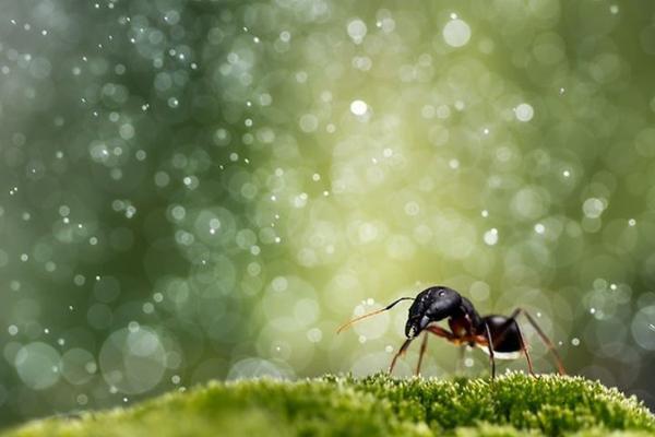 梦幻昆虫照
