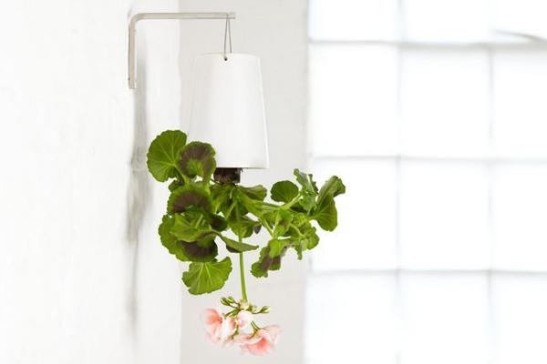 倒立生长的花盆