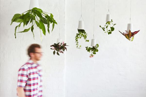 倒立生长的花盆(四)
