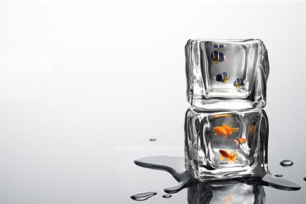 Ice Fishing 冰冻鱼缸(二)