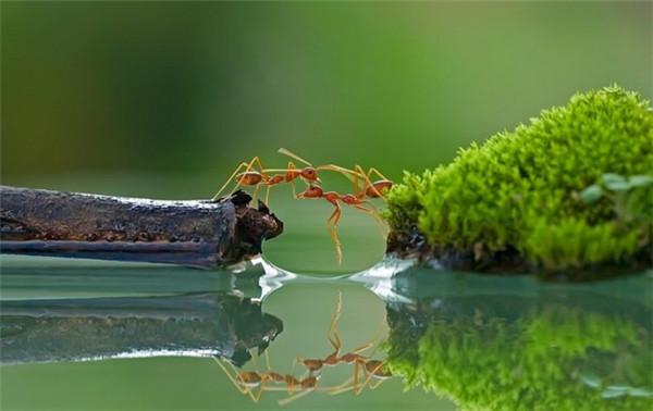 美得过分的水中倒影(九)