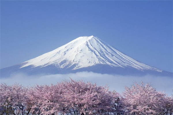 来自世界各地的樱花胜景(十一)