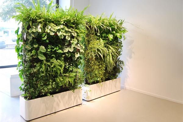 很有感觉的室内绿植