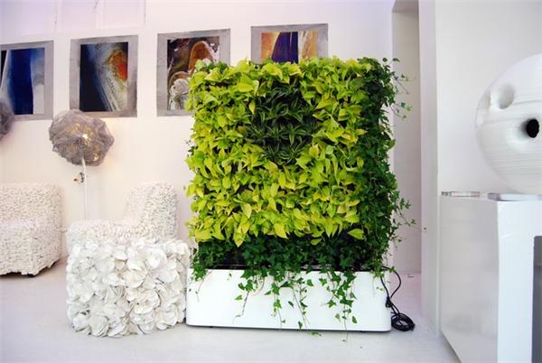很有感觉的室内绿植(二)