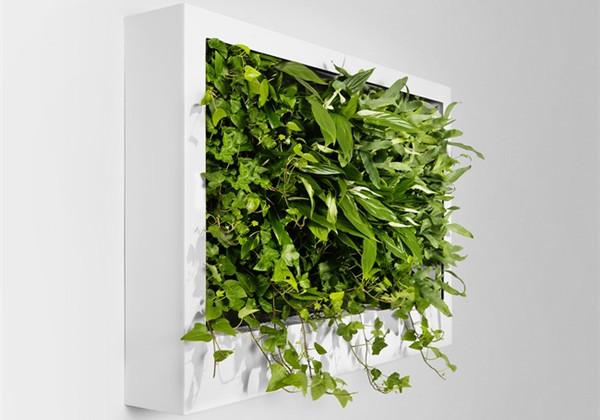 很有感觉的室内绿植(四)