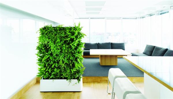 很有感觉的室内绿植(七)