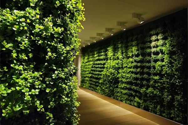 很有感觉的室内绿植(八)