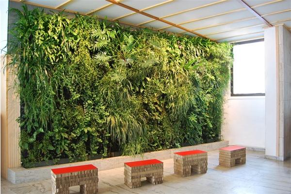 很有感觉的室内绿植(十一)