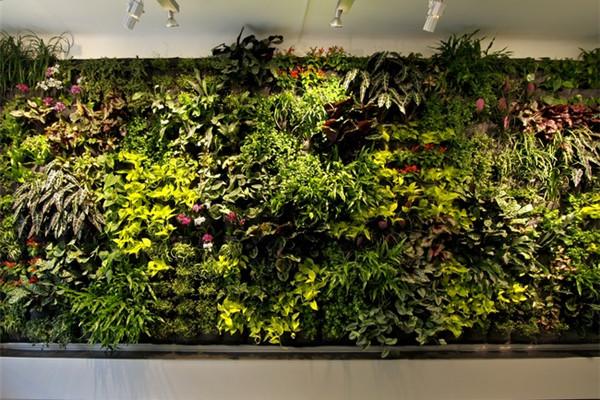 很有感觉的室内绿植(十二)