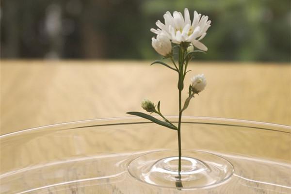 赋予诗意的涟漪花瓶(三)