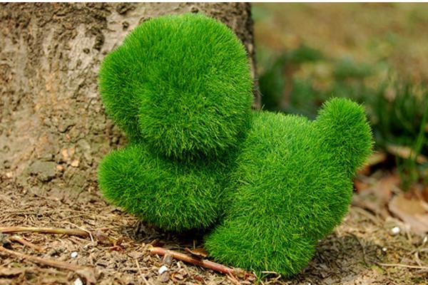 有趣给力的人造草(三)