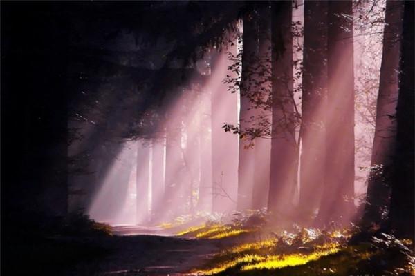 超美的四季森林