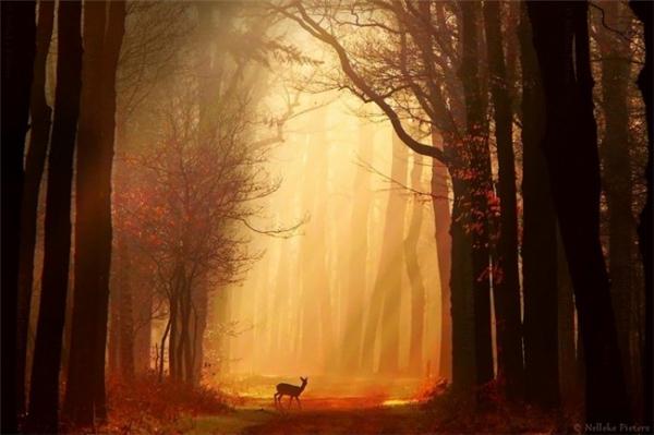 超美的四季森林(二)