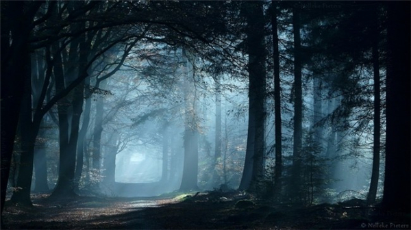 超美的四季森林(三)
