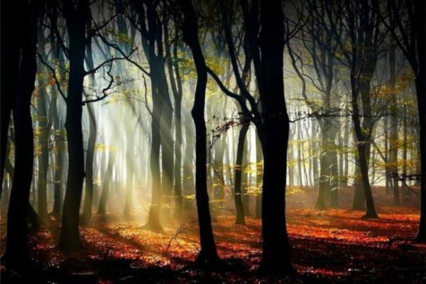 超美的四季森林(五)