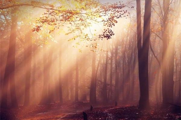 超美的四季森林(九)