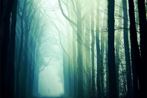 超美的四季森林(十四)
