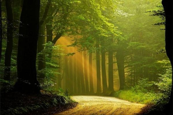 超美的四季森林(十五)