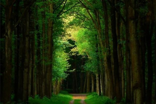 超美的四季森林(十六)