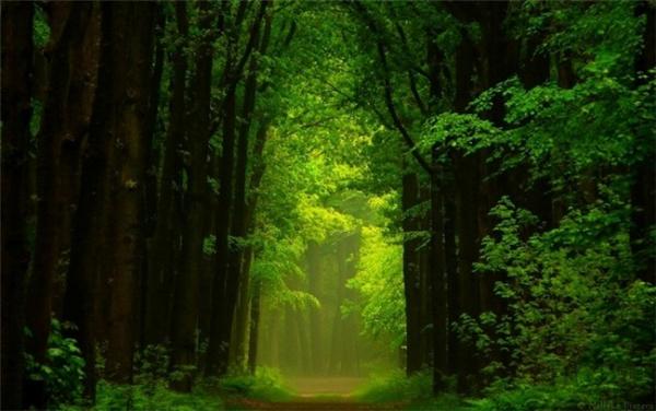 超美的四季森林(十七)