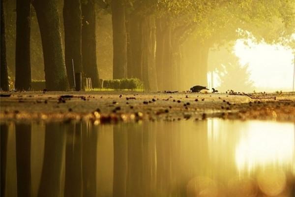 超美的四季森林(十八)