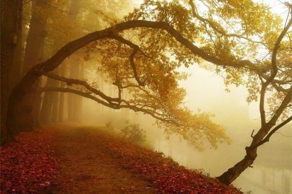 超美的四季森林(十九)