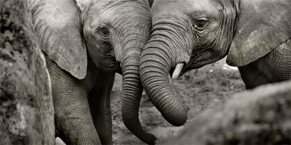 精彩的野生动物摄影