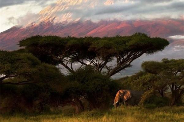 精彩的野生动物摄影(三)