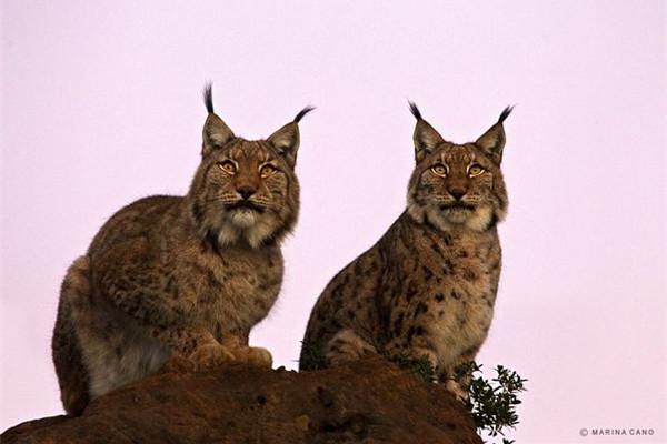精彩的野生动物摄影(五)