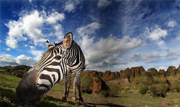 精彩的野生动物摄影(七)