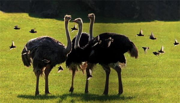 精彩的野生动物摄影(八)