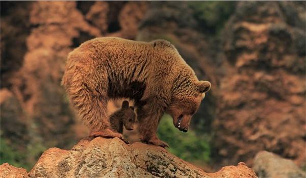 精彩的野生动物摄影(十)