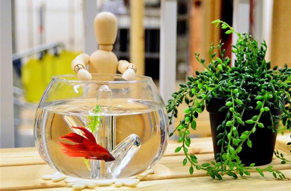 水晶珊瑚桌面鱼缸(四)