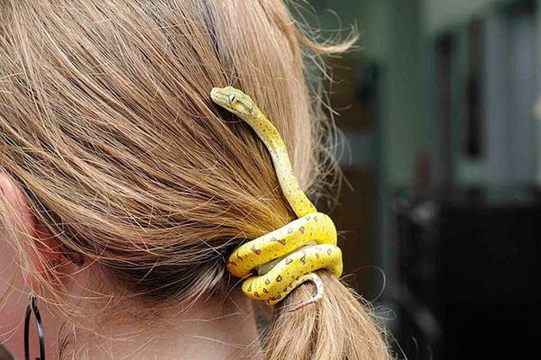 恶搞的逼真蛇形盘饰