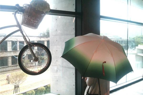 充满绿意的葱伞(七)