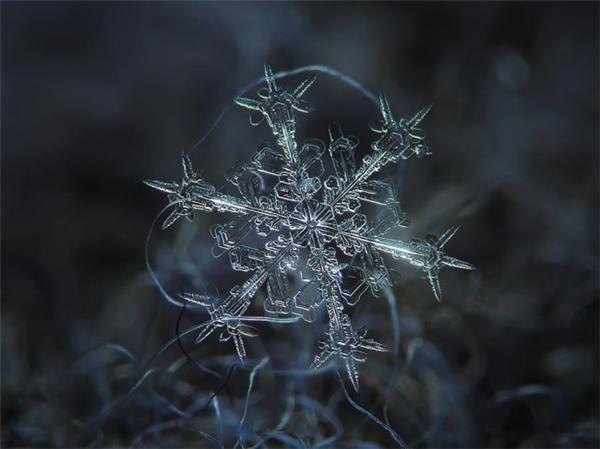绝美的微距雪花(三)