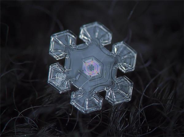 绝美的微距雪花(十一)