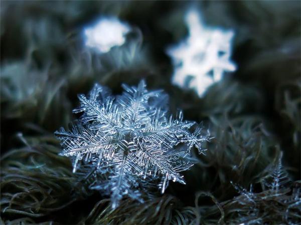 绝美的微距雪花(十三)