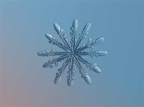 绝美的微距雪花(十六)