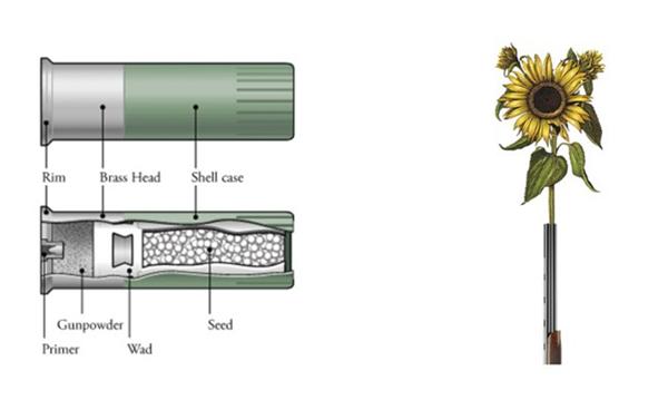 神奇的花种子弹(三)
