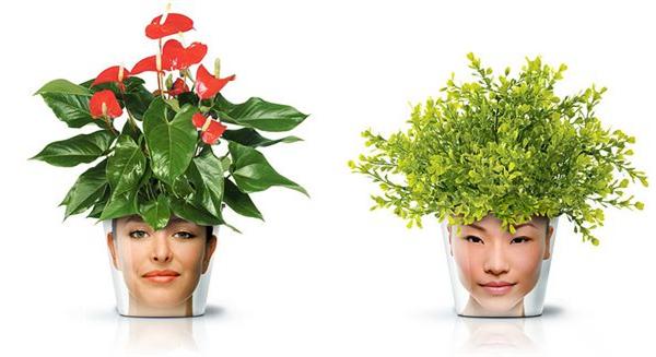 非常搞笑的头像花盆