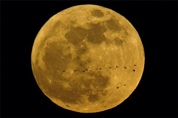 元宵不忘赏月