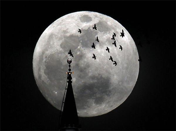 元宵不忘赏月(十)